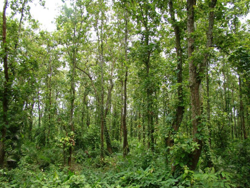Madhupur National Park