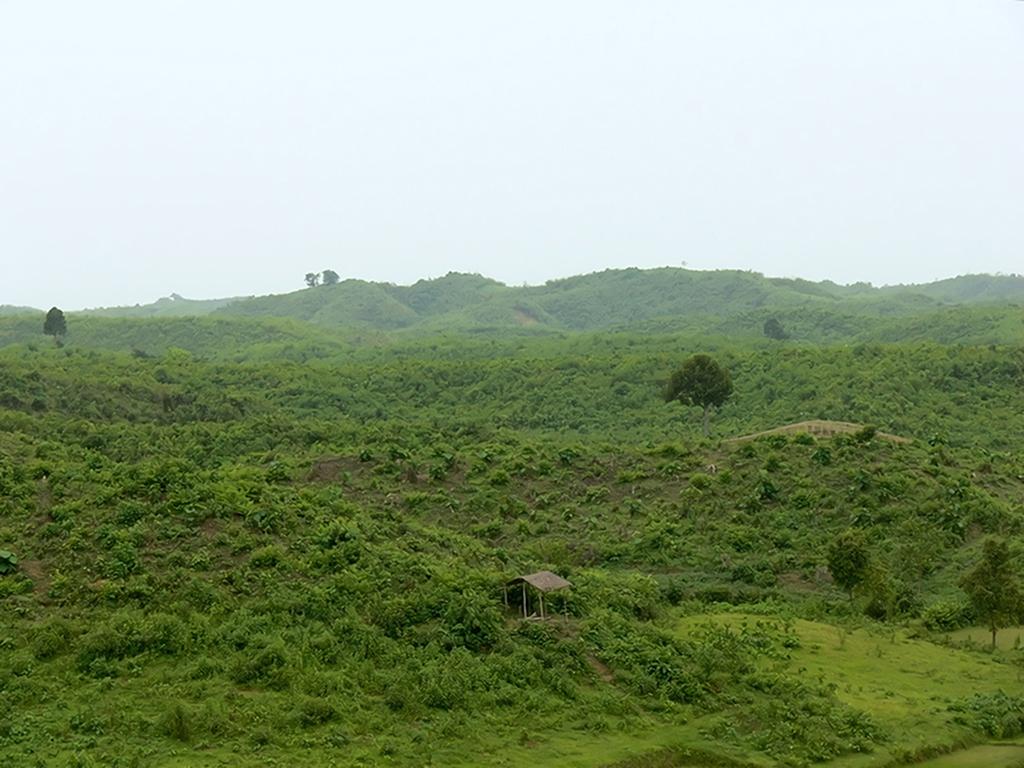 Photo: Kamrul