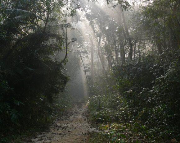 Lawachara National Park