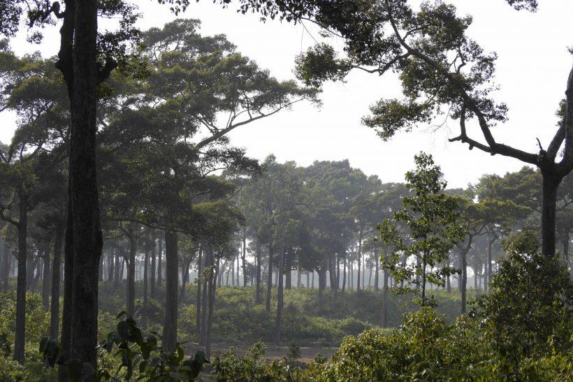 Medhakachapia National Park