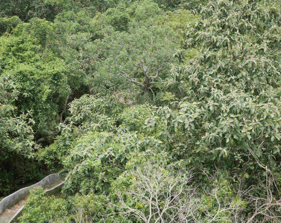 Satchari National Park
